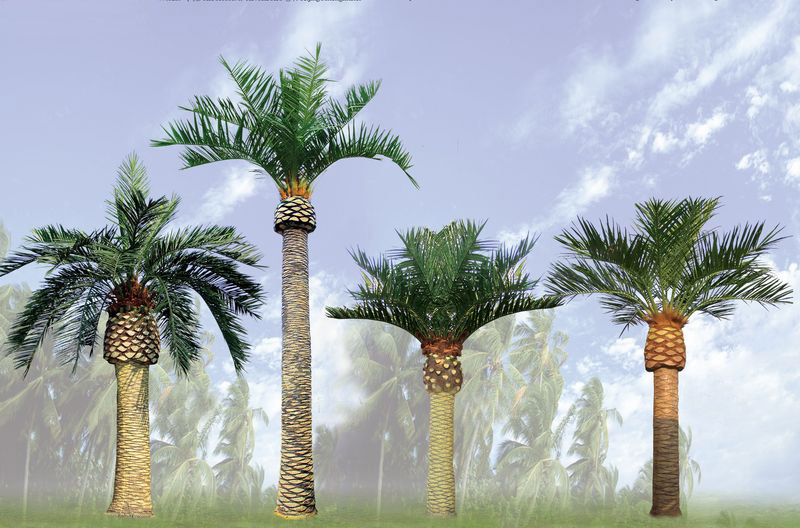 Canary Island Date Palm Tree Picture
